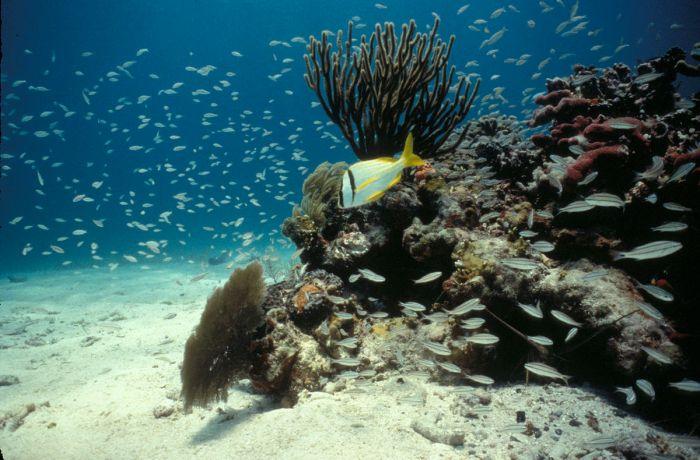 Biscayne National Park reef