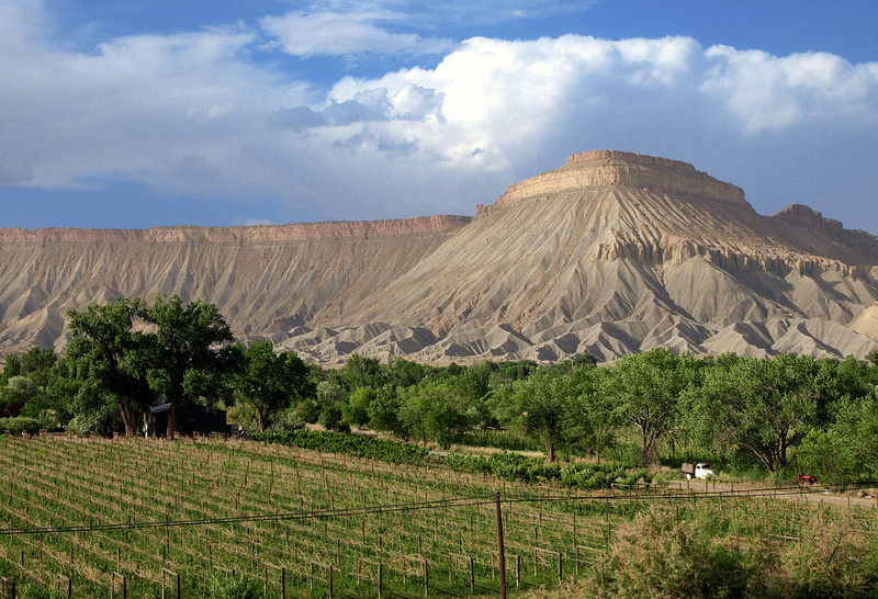 Winery in Grand Junction, Colorado